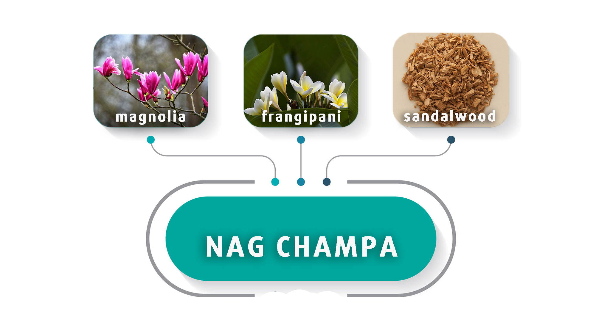 Champa is however, composes of ingredient like magnolia, frangipani and fine sandalwood, and hence makes it riches and glow in smelling
